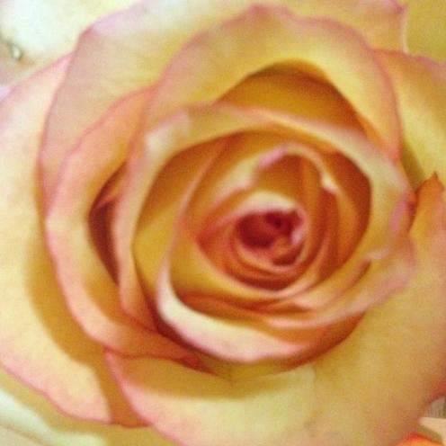 Rose Petal Foot Soak from AMODERNCINDERELLA.COM
